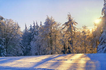 Scenic sunset in forest - winter mountains landscape. Hoary trees  illuminated by sunlight.