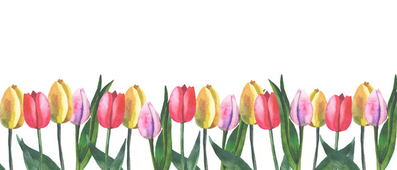 border of tulips on white background with watercolor