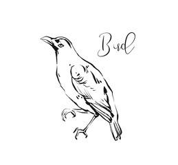 Hand drawn vector abstract artistic ink textured graphic sketch drawing illustration of forest bird isolated on white background