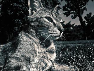 Cat laying in grass macro