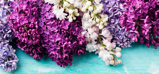 Bunch of lilac flowers on a turquoise background
