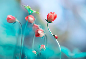 Beautiful pink flowers anemones and ladybug in spring nature outdoors against blue sky, macro, soft focus. Magic colorful artistic image tenderness of nature, spring floral wallpaper. Wall mural