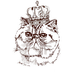 Exotic Shorthair cat portrait with the crown