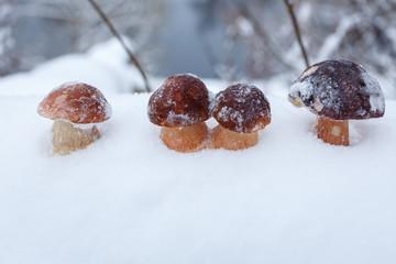 Белые грибы на снегу