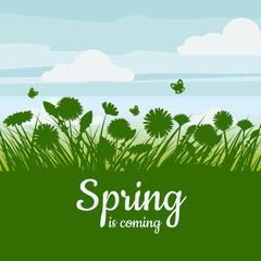 Spring is coming. Green field, flowers, sky. Camomile, grass, dandelion. Background. Vector, isolate, illustrarion, baner, flyer
