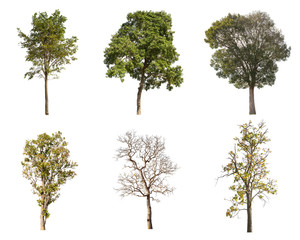 Isolated collection tree on white background
