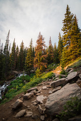 The sun rising shining light onto trees on the trail up to Longs Peak in Colorado.