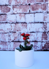 Red flowers in a white vase on a brick backdrop.