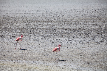 2 Flamingos in the Andes