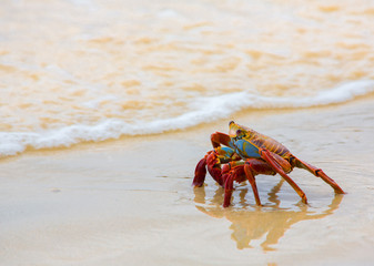 Crab on Sand Beach - Side View