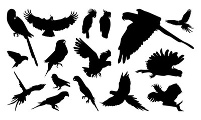 Set of Various Pose Parrot Silhouette vector