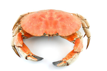 single steamed crab isolated on white background