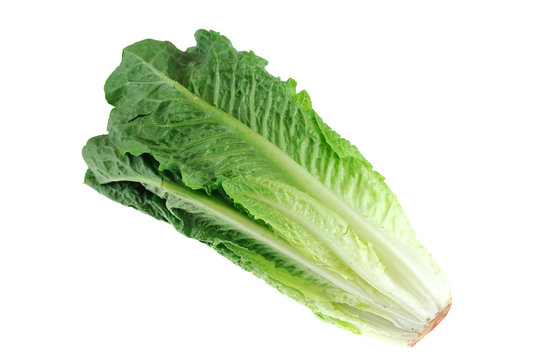 Fresh romaine lettuce isolated on white background