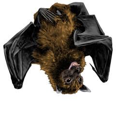 bat hanging upside down sketch vector graphics color picture