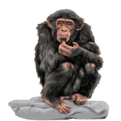 chimpanzee sitting on a rock and scratches his chin sketch vector graphics color picture