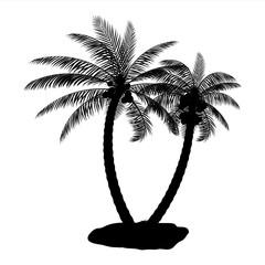 Tropical palm silhouette