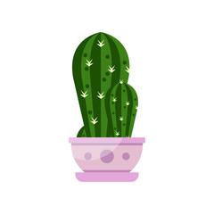 Cactus house plant, indoor flower in pot, elegant home decor vector Illustration