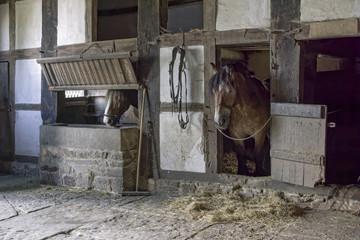Pferdestall historisch