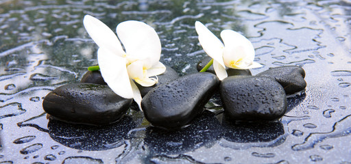 Two orchid flowers and stones. Spa background.