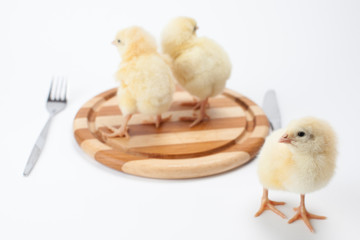 live chickens on a chopping board. On a white background. vegetarianism