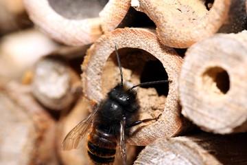 Fleissiges Insekt