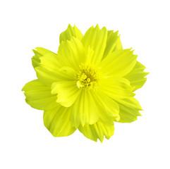 Beautiful yellow flower isolated