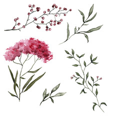 Set with steppe flowers. Isolated on white background.
