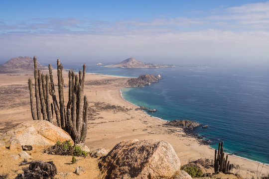 Coast of Pan de Azucar National Park in Chile. Atacama desert coast and cactus