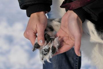Frau kontrolliert die Pfoten ihres Hundes