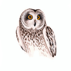Canvas Prints Owls cartoon Watercolor owl on a white background. Copy space. Hand drawn isolated owls illustration with bird, portrait of an owl for decor and decoration.