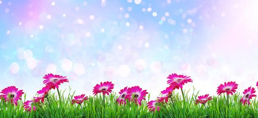 Gerbera pink auf hintergrund natur