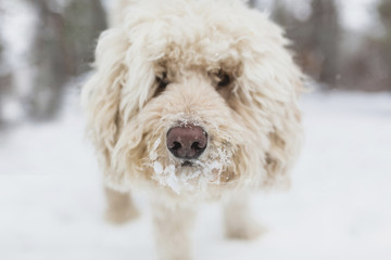 Close-up portrait of dog standing on snow covered field