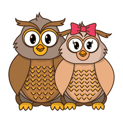 owl couple cute animal together