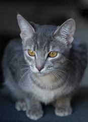 Curious kitten, focus on eyes, shallow depth of field.