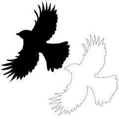 vector, isolated silhouette of flying bird