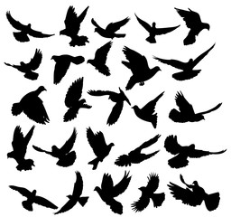 isolated, silhouette of flying birds, set