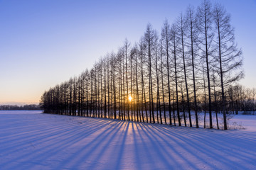 Wall Mural - 厳冬期の雪原に沈む夕陽