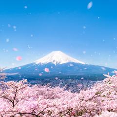Poster Lieu connus d Asie Berg Fuji im Frühling mit Kirschblüten, Japan