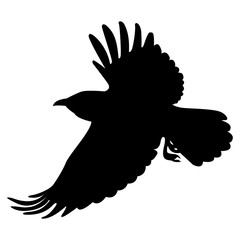 Vector image of silhouette of a raven flying on a white background