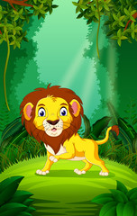 Lion in the clear and green forest