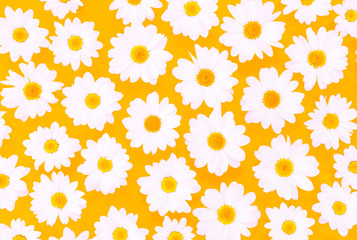 White daisies on yellow background flat lay top view - Spring time concept with .flowers  compositionon on pastel cardboard
