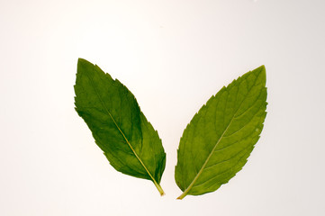 Two mint leaves