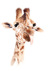 watercolor giraffe. sketch