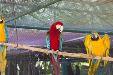 Beautiful big parrot