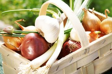 Onions, Zwiebeln, Knoblauch, Schnittlauch, Korb, Textfläche, copy space