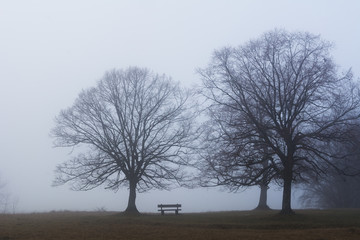 Baum Silhouette im Nebel, einsam, depressiv, frei, schön