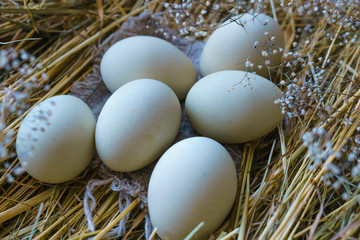 Fresh, natural rustic white chicken eggs on a litter of hay.