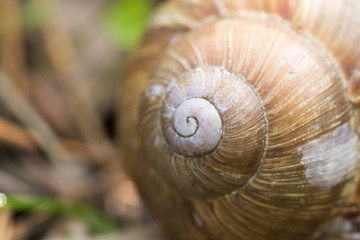 carapace,curls,  life, macro, nature, shell, snail, texture