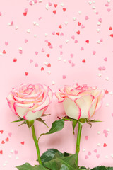 Two pink blooming fresh rose flower on pink background with colorful hearts