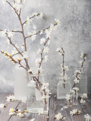Blossoms (apple tree flowers)  in vases on grey wooden table. Flowers composition. Spring blooming. Blossom branches. Springtime.